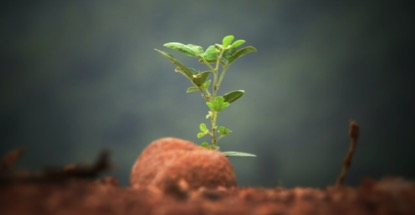 sprout-by-Sushobhan-Badhai.jpg